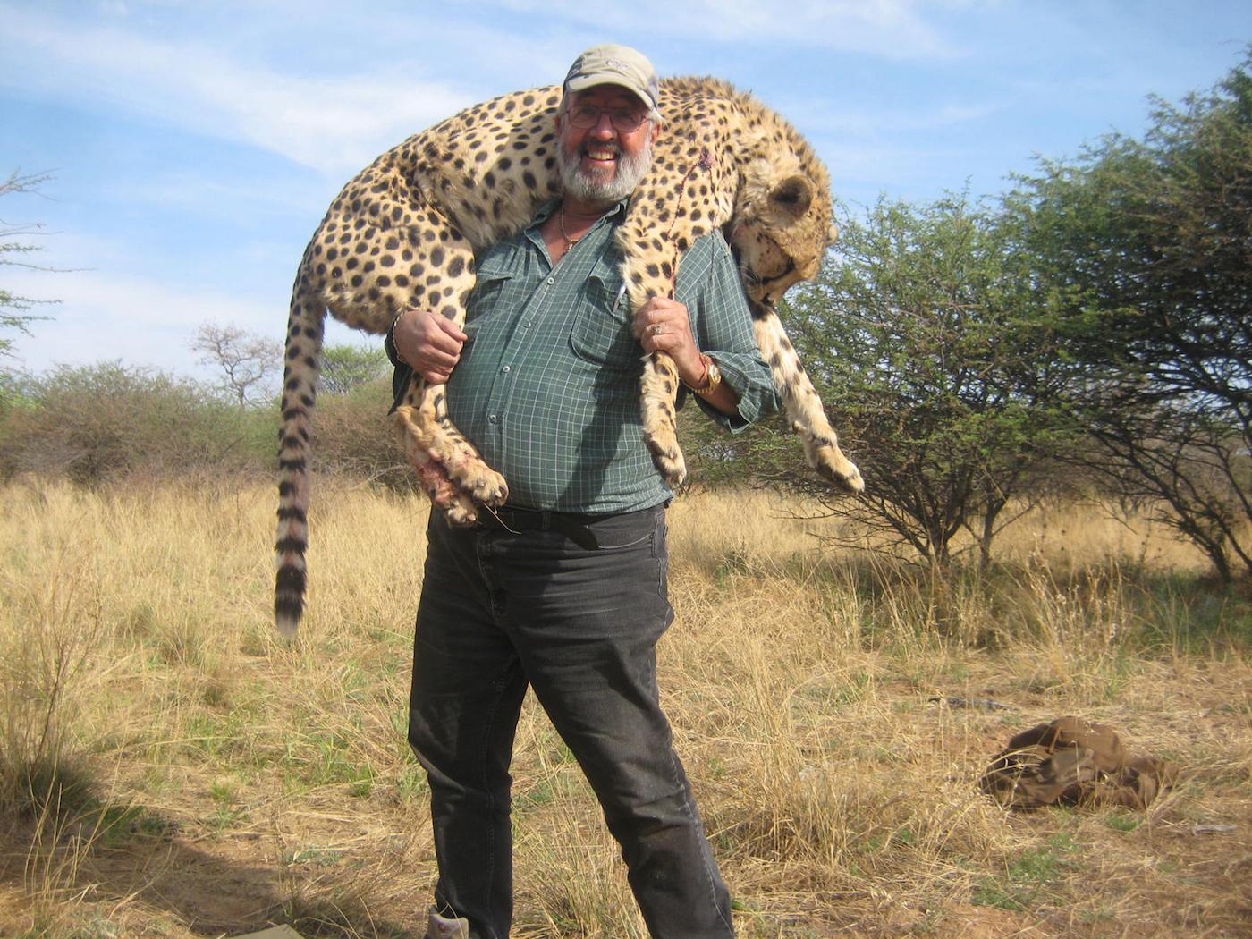 hunting-cheetah-007