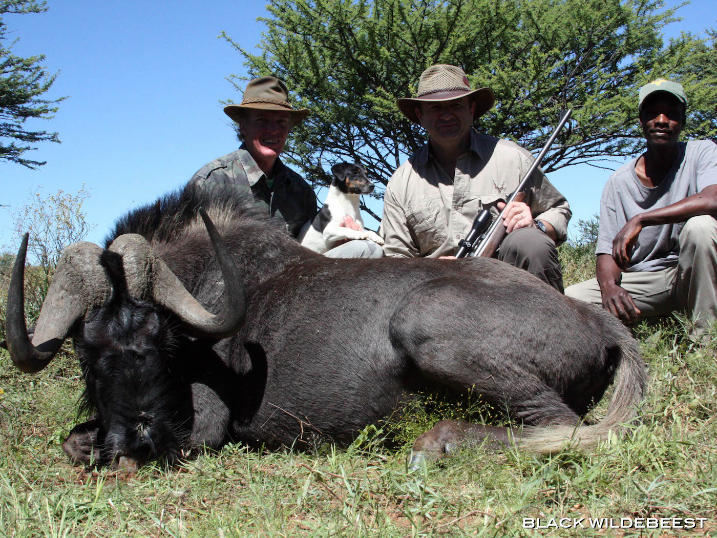 africa-hunting-black-wildebeest