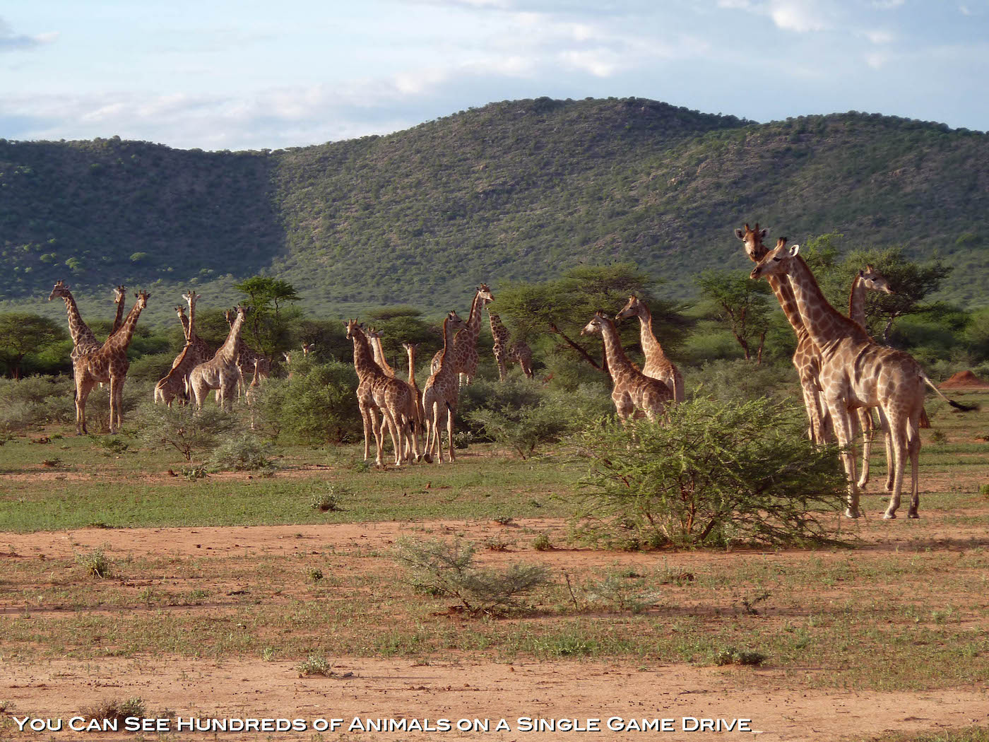 africa-hunting-giraffe
