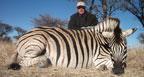 hunting-africa-burchell-zebra