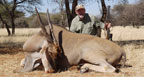hunting-africa-cape-eland
