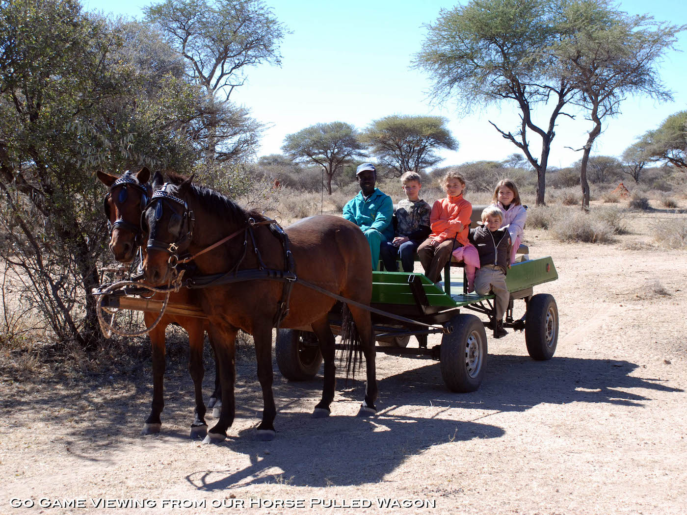 namibia-hunting-Carriage