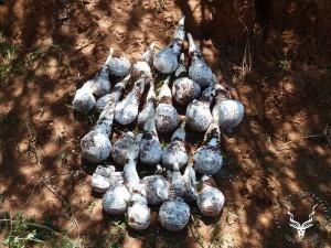 namibia-hunting-omajowa-Mushroom-06