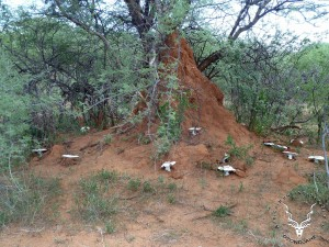 namibia-hunting-omajowa-Mushroom-08
